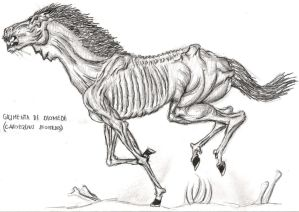 diomedes horse