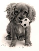 Commission - 'Oscar' Ruby King Charles Spaniel by Captured-In-Pencil