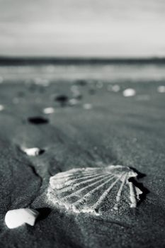 Sea Shells by munri099