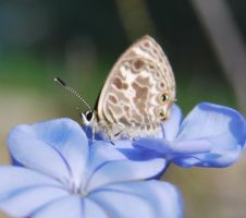 Nature - Butterfly Stock 02. by stock-basicality