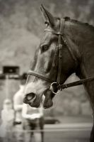 Bridled... by amzb87