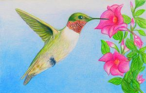 Ruby-Throated Hummingbird by PMucks