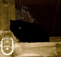 one-eyed stable-cat... by xyzetka