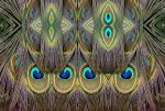 Peacock Tail Eyes by aegiandyad