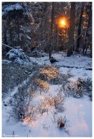 Warm Lights, Frozen Forest by FlorentCourty