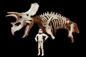 triceratops and our stromtrooper by hannay1982