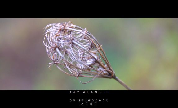DRY PLANT III by science10