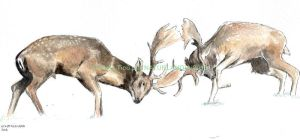 Fallow deer FIGHT by VickyTico