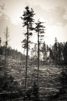 What 's left of the forest by vlkovab