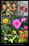 Flower Package vol 2 by Eirian-stock