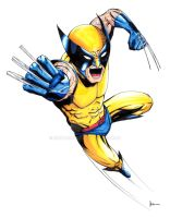 Wolverine by kentarcher