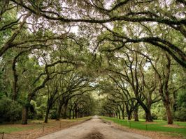 Wormsloe Plantation in Savannah, Georgia. by PhotoshopGirl29