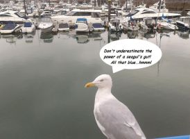 Sick Seagull by UncleGargy