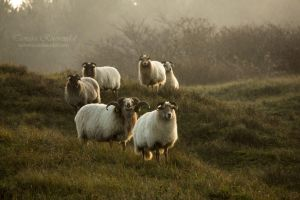 Line up by TammyPhotography