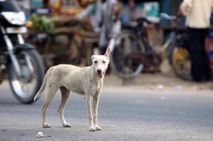 Street Dog by mercyop