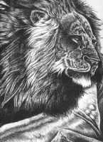 Asian Lion--Pen and Ink by raccoonlady