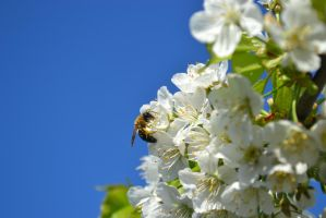 bee by PKphotos