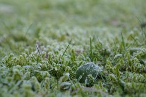 FROZEN LIFE by CHRISwillar