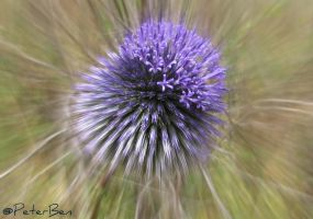 Purple Spikes by PeterBen