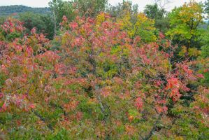Change in Leaves view from Tower Gettysburg by ENT2PRI9SE