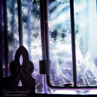 Caged by TammyPhotography