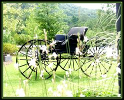 Carriage by Curim