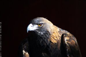 Eagle Eye by Riphath