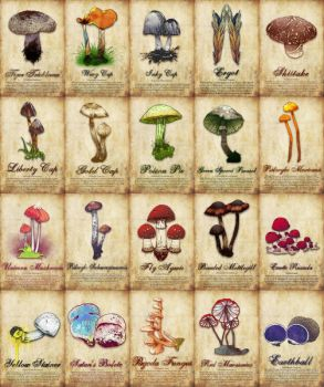 Mushroom Poster 02 by turp