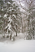 Winter Forest Stock 50 by AreteStock