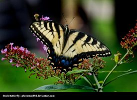 Stock butterfly 437 by photoman356
