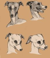 Whippets by SolaValko