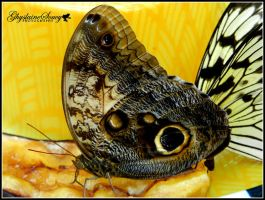 Science North butterflies by gigi50