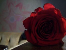Red Rose 001 by DominosAreFalling