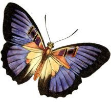 Purple Butterfly Clipart by HauntingVisionsStock
