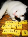 part of scrabble ... by theircatseyes
