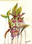 Orchid by circuscreative