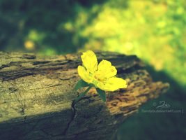 yellow flower by Mandy0x