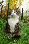 Cat in summer by frimmi