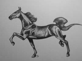 saddlebred free trot by Comix-Chick
