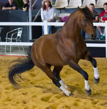 STOCK - 2014 Total Equine Expo-119 by fillyrox