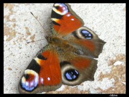 Butterfly On The Stonestairs by MKlver