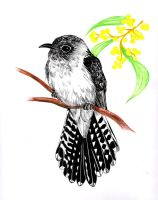 Fan-tailed Cuckoo by Sasquatch69