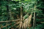 The Wooden Bridge in the Forest by niiinBoo