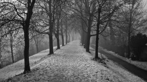 Mistery at the end of the path by jorago