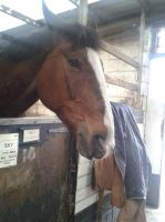 Horse Stock- Angry Mare by emmys-stock