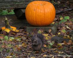 The One About the Squirrel and the Pumpkin by vanwaglajam