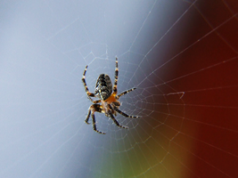 53. spider by littleconfusion