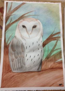 Barn Owl Watercolor by FalloutLuver13