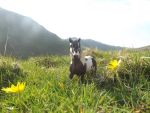 Schleich Horse in the Wild :) by Candyfloss-Unicorn