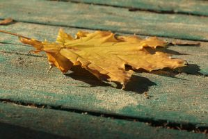 Yellow maple leaf by mangorielle